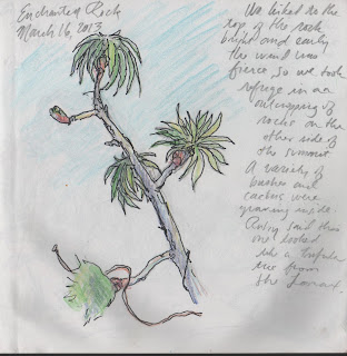 sketch of tree at Enchanted Rock by David Borden