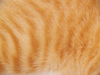 An orange tabby cat's fur_Adobe Stock