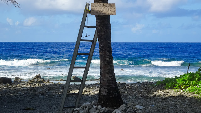 Want to escape the water in Tuvalu on a tree?
