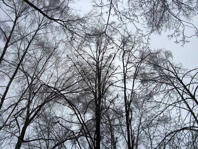 Ледяные ветви
