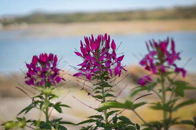 basdufleuve,fleur,flore,emmanuellericardphoto,emmanuellericardblog