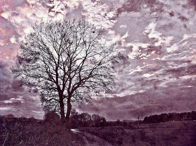 Baum am Feldweg