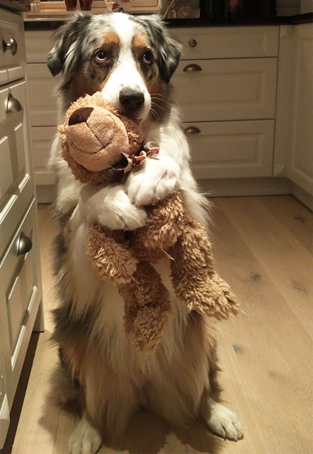 I just wanted to show you my Teddy Bear