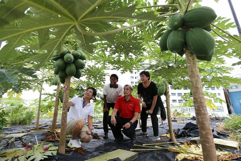 Landscape architect Khairullah Abdul Razak (second from left) with members of the team he advises, including Madam Kamisah Atan (far right).