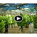 How Do They Do It - How to Harvest and Process Bananas, Apples.