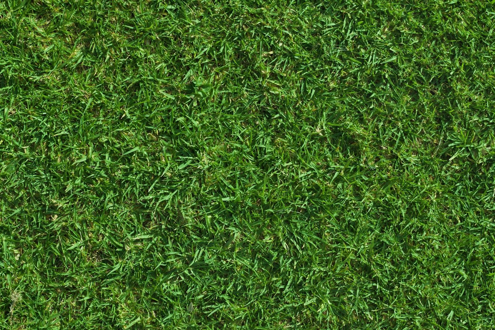 Grass Texture Seamless Hd