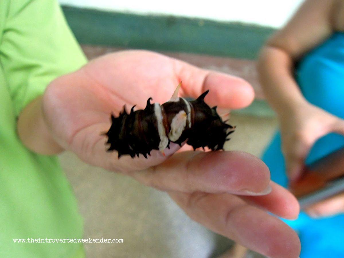 A caterpillar at Habitat butterfly sanctuary in Bohol