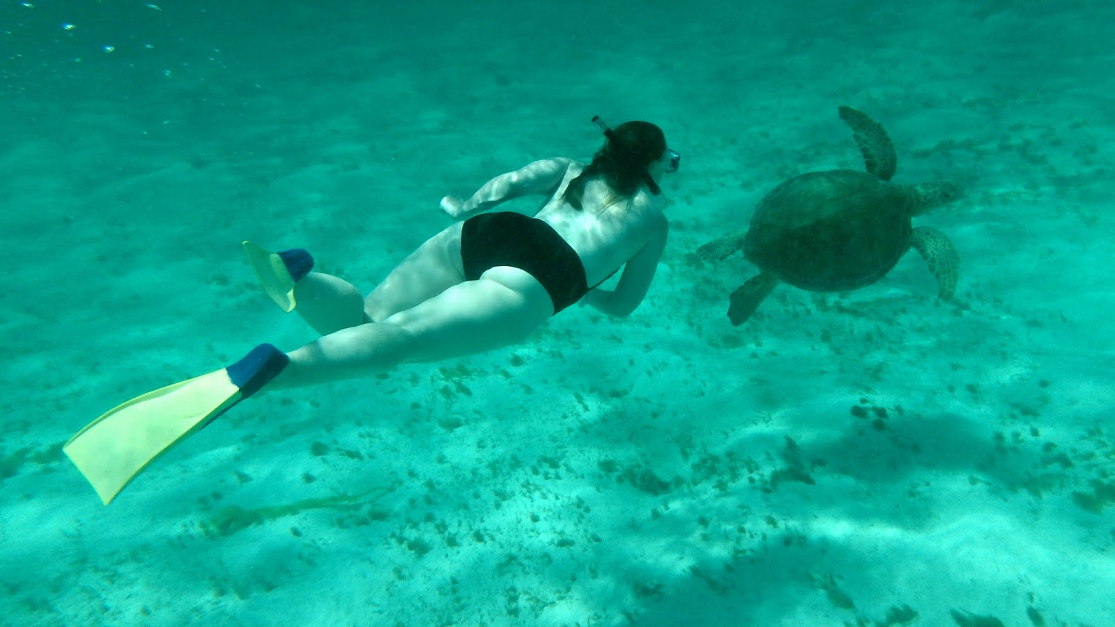 Swimming with sea turtles in the Tobago Cays Caribbean