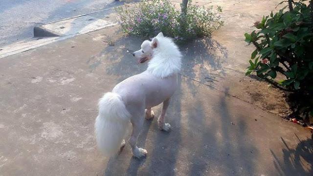 Đố bạn biết, đây là chó hay là ngựa?