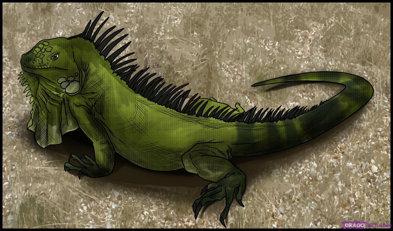Iguana Like Dog