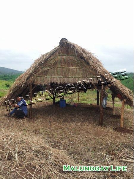 moringa-farm-shelter
