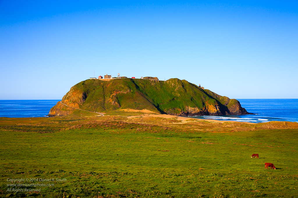 a photo of cattle grazing near point sur lighthouse california