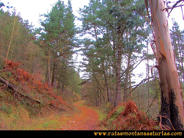 Rutas Montaña Asturias: Ruta entre pinos