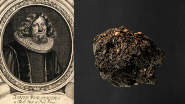 Danish bishop's 300-year-old poo offers whiff of history
