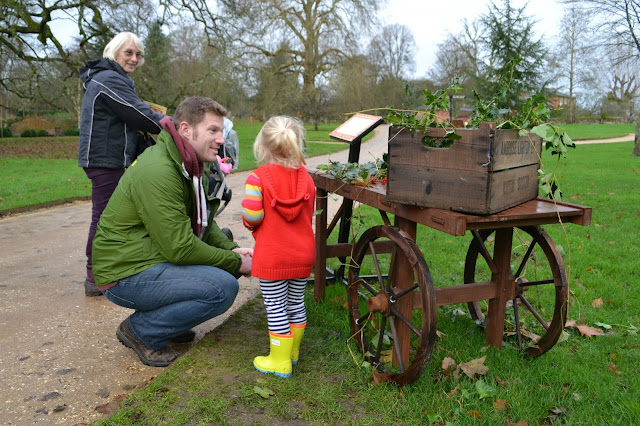 Tin Box Tot looks at holly and ivy in an old market cart at Mottisfont Abbey