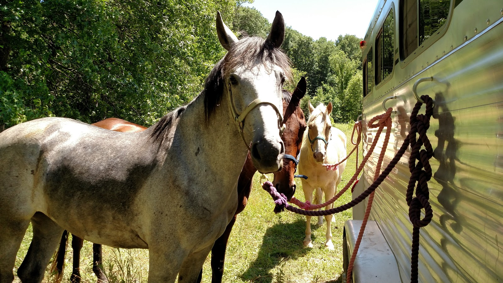 Confessions of a Dressage Barbie: Baby's Big Adventure