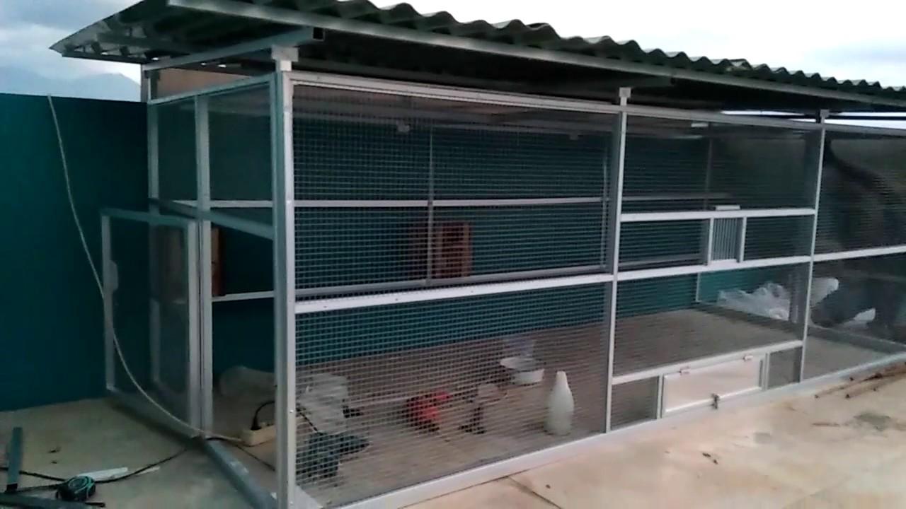 Contoh Cara membuat Kandang Koloni Ternak Lovebird sederhana   Trik dan Tips Budidaya