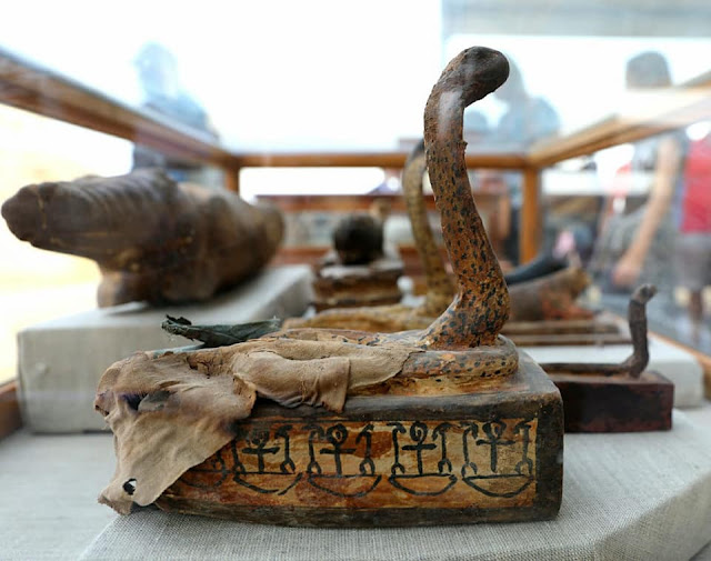 Mummified sacred beetles and cats found in ancient Egyptian tombs