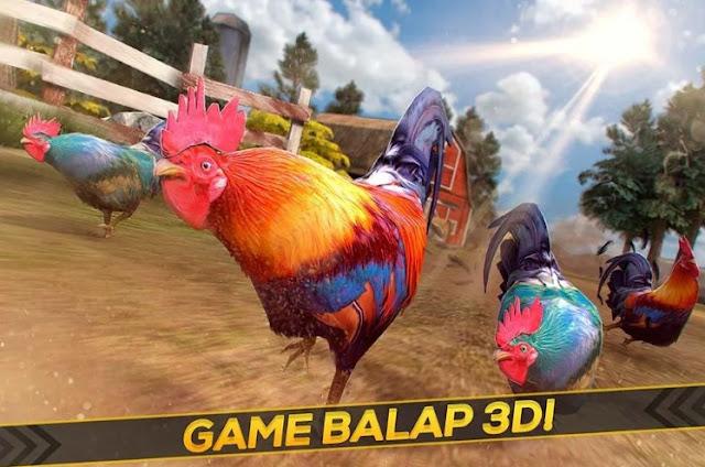 Balap Ayam Jago – Gila Tanah Peternak Ras