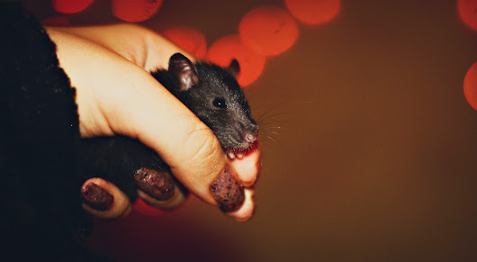 What I Learned from Owning Rats