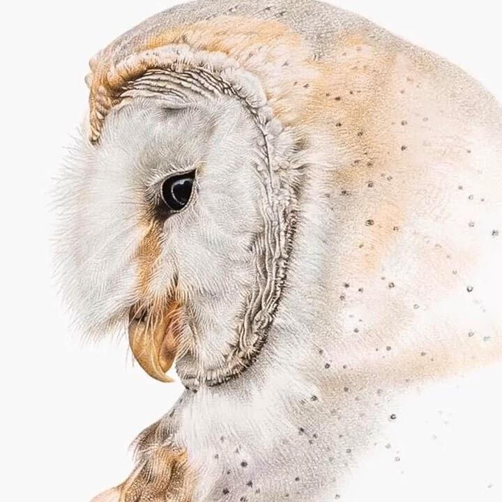 02-Barn-Owl-Martin-Aveling-Animal-Portraits-www-designstack-co
