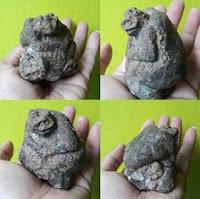 Batu Fosil Mustika Katak