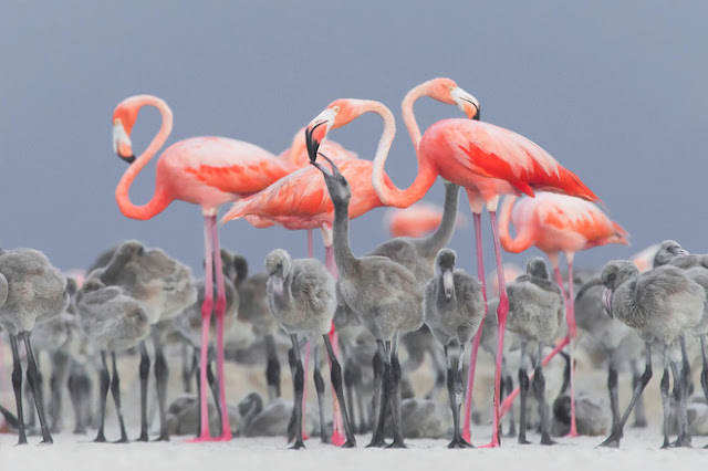 Những tác phẩm thắng giải Ảnh loài chim đẹp nhất 2017, in ấn thiết kế AmyPrint