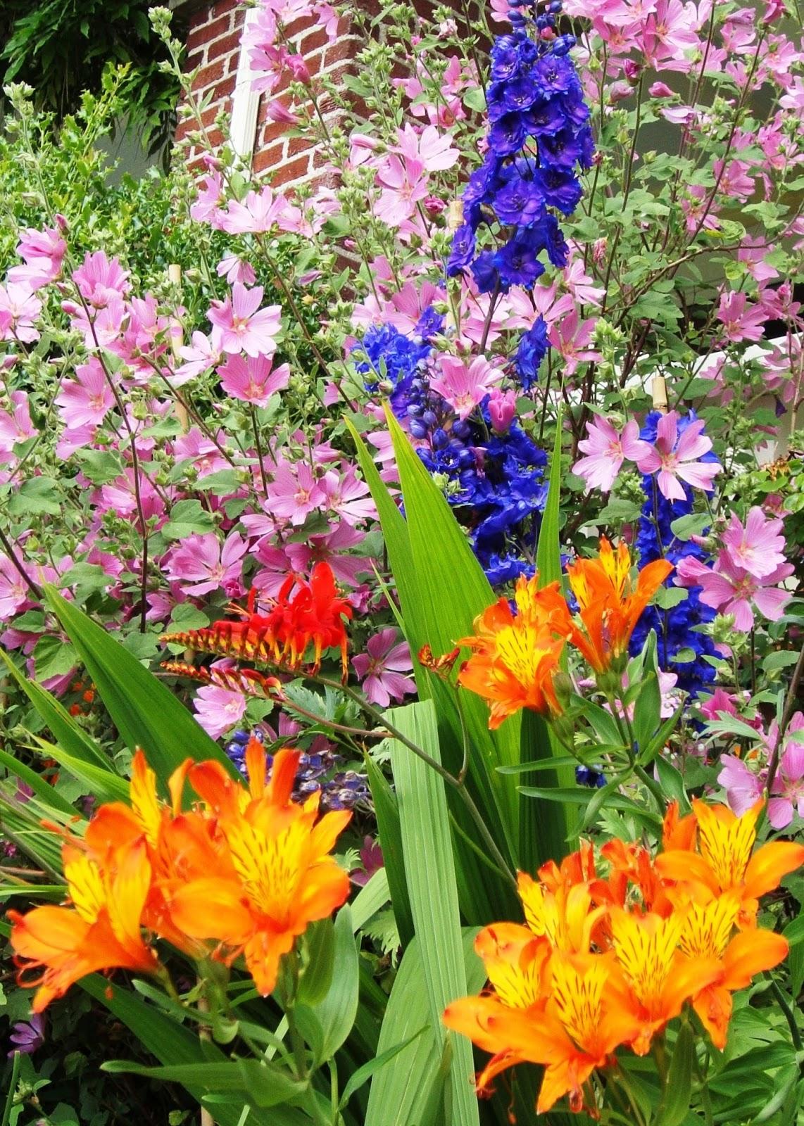 Pre Planned Flower Garden Designs: The Garden Oracle: FLOWER SEEDS, PLANTS & BULBS