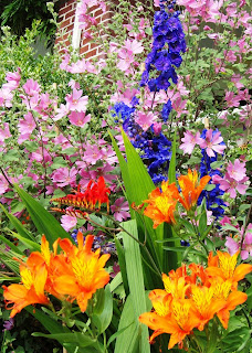 The Garden Oracle's Perennial Flower Plants Pages:  Browse Our Large Selection of Perennial Flower Plants for Your Flower Beds, Perennial Borders, Ornamental Gardens, Landscape, Containers, and Cutting Gardens! Choose From Modern Hybrids, Treasured Heirlooms, Hard to Find Flowers, Wildflowers, Border Classics, Pre-Planned Gardens and Specialty Types.  Diverse Collection - Keep the Show Going all Through the Growing Season!  Happy Flower Shopping!