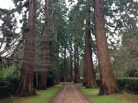 Sunnycroft redwoods