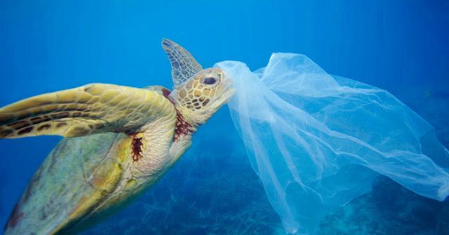 Free plastics océanos