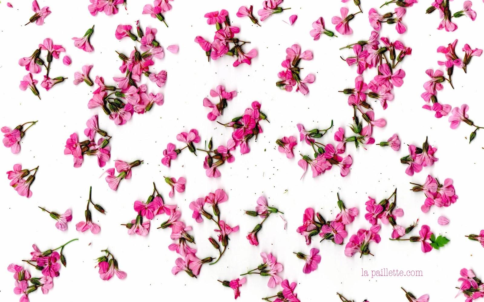 fonds d 39 cran jolies fleurs 1 claire la paillette blog rennes claire illustratrice et. Black Bedroom Furniture Sets. Home Design Ideas