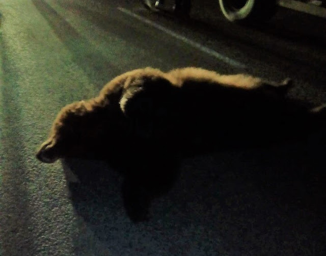 В Башкирии под колёса машины попал медведь