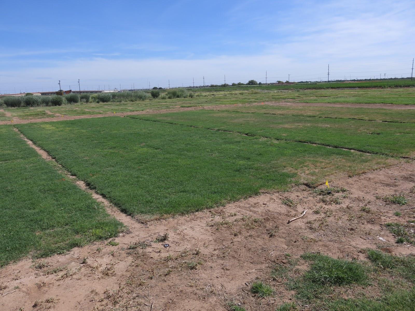 Spring Lawn Management 101: Irrigation | Texas Tech Turfgrass Science