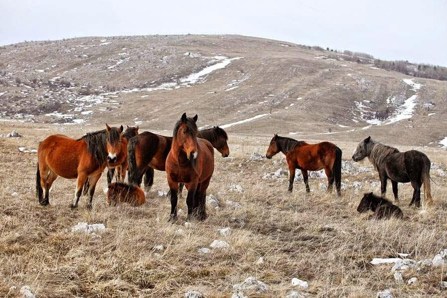 fotografias de caballos silvestres