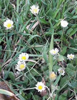 chasse tresor sensorielle activité enfant nature exterieur foret photo fleurs