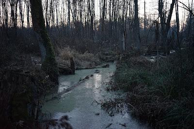okolice Zaborowa Leśnego