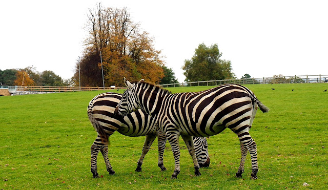 Seepra, Fota Wildlife Park