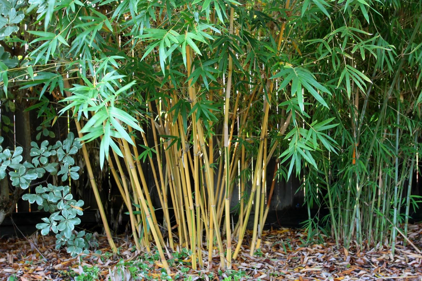 El bamb en el Jardn : Jardn y Terrazas