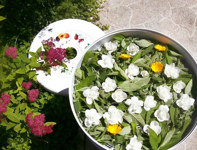 зелень и жасмин понемногу собираю и сушу для зимних чаёвничаний