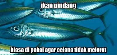 10 Meme 'Jenis Ikan' Ini Kocak Banget, Hati-hati Salah Nyebut!
