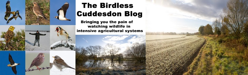The Birdless Cuddesdon Blog