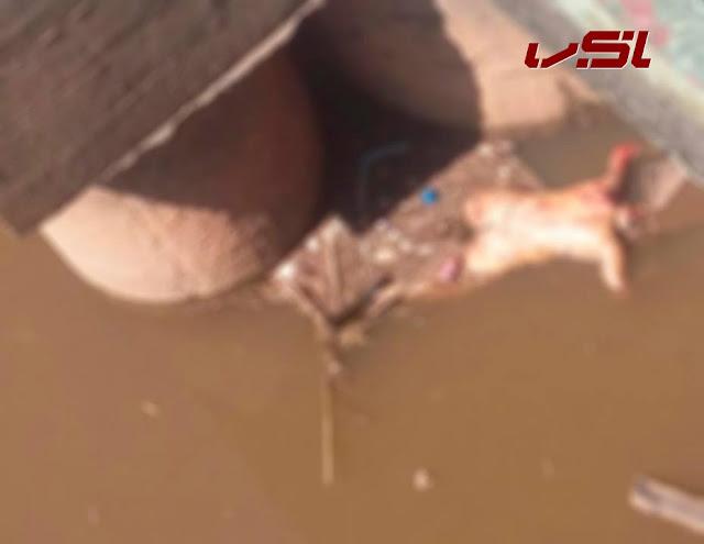 Corpo de mulher é encontrado boiando no Rio das velhas em Santa Luzia
