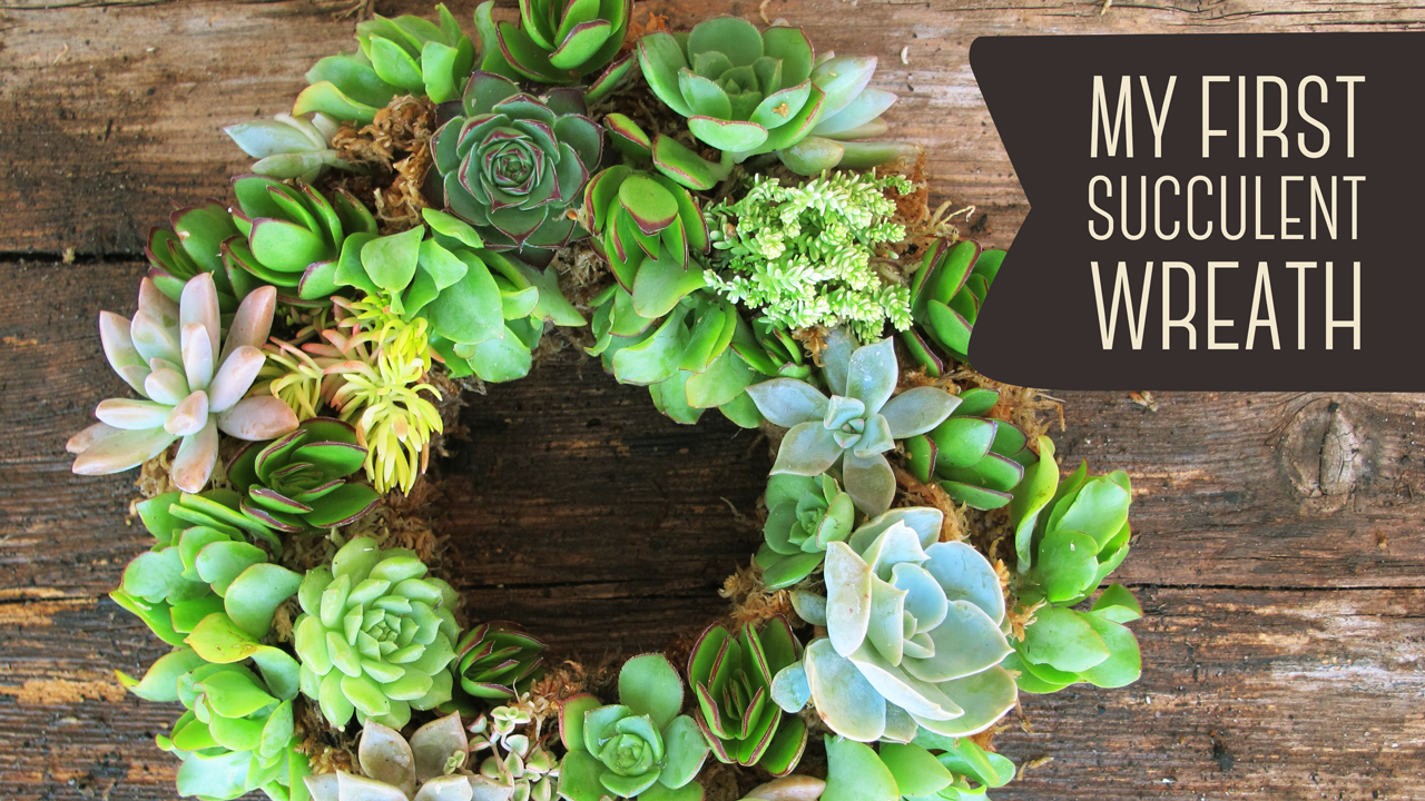 My First Living Succulent Wreath   How To Make Your Own (DIY)