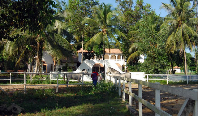 Hotel menarik untuk anak-anak di Cherating