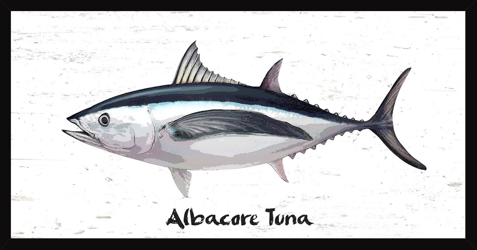 Canned tuna manufacturer indonesia canned tuna for Tuna fish size