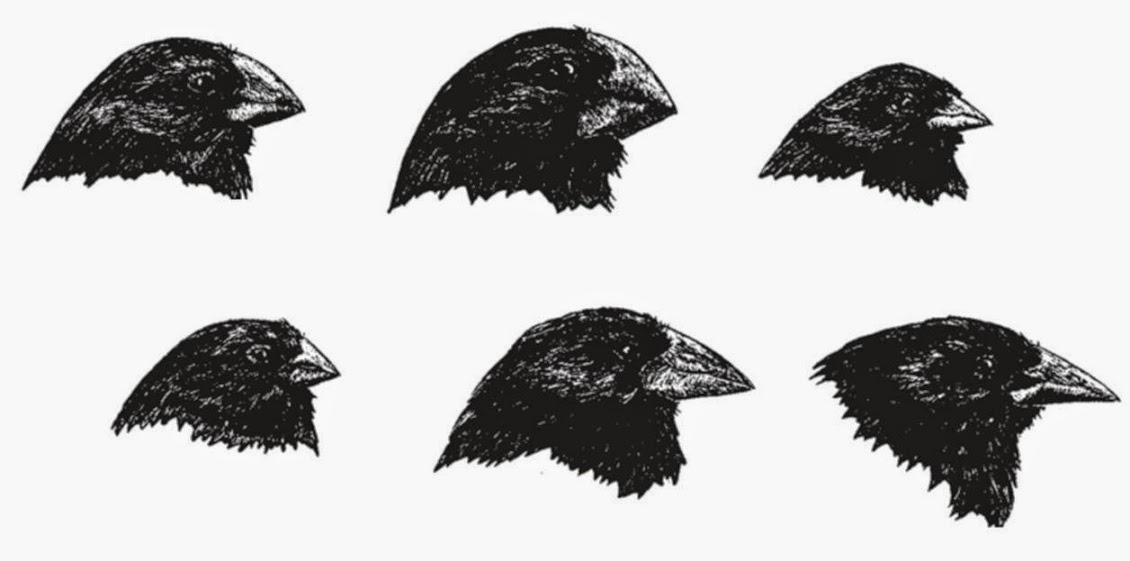 Darwin y sus pinzones