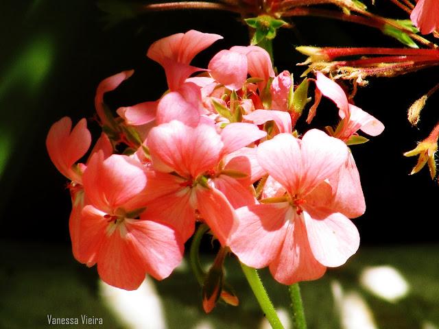 photovanes, flores, folhas,  8on8, natureza, galhos, árvores, vida, vanessa vieira, fotografia, vanessa vieira fotografia