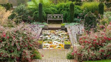 Foto del día: fuchsias y verbenas en los jardines de Hole Park