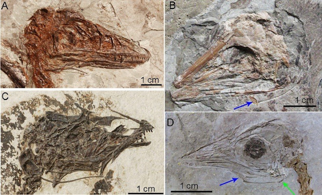 Dinosaurs couldn't stick out their tongues, new research shows